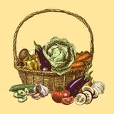 Vegetables sketch color Royalty Free Stock Photo