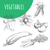 Vegetables sketch pencil illustration. Organic vegetarian food. Vegetables. Hand drawn pencil sketch illustration. Fresh farm vegetarian food. Vegan design for Royalty Free Stock Images