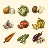 Vegetables sketch set color Royalty Free Stock Image