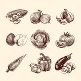 Vegetables sketch set royalty free illustration