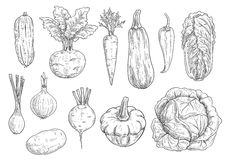 Vegetables Sketch Vector Isolated Icons Stock Images