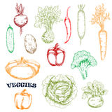 Vegetables sketches in retro style Royalty Free Stock Images