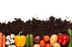 Vegetables on the soil Stock Image