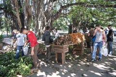 Vegetables on street market, Cuba stock image