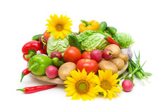 Vegetables and sunflowers on a white background Stock Photography
