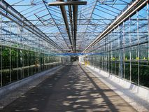 Vegetables tourist glass corridor in greenhouses Stock Photography