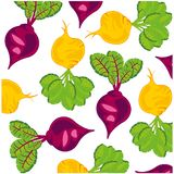 Vector illustration fresh vegetables beet and turnip. Vegetables turnip and sugar beet on white background is insulated royalty free illustration