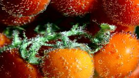 Vegetables. Twig of tomatoes in water with bubbles stock footage