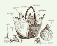 Vegetables vector hand drawn Royalty Free Stock Images