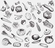 Vegetables vector hand drawn Royalty Free Stock Photo