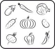 Vegetables vector hand drawn Stock Photos
