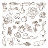 Vegetables. Vector illustration.Design elements. Royalty Free Stock Photography