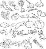 Vegetables - vector linear drawing Royalty Free Stock Photography