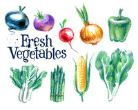 Vegetables vector logo design template.  fresh Stock Photography