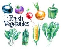 Vegetables vector logo design template.  fresh Stock Photography