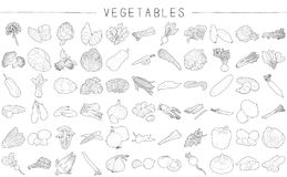 Vegetables. Vector Pencil Drawing Cartoon Art Royalty Free Stock Image
