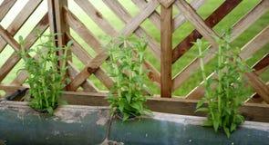 Vegetables vertical garden Stock Photos