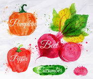 Vegetables watercolor corn, broccoli, chili,. Vegetables set drawn watercolor blots and stains with a spray pumpkin, beet, pepper, cucumber Royalty Free Stock Photos