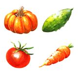 Vegetables, watercolor illustration Stock Photo