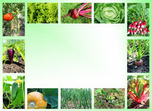 vegetables on a white and green background. Royalty Free Stock Photography