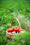 Vegetables in wicker basket Royalty Free Stock Photography