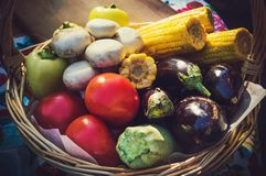 Vegetables in wicker basket. Autumn harvest: zucchini, mushrooms, eggplant, tomatoes and corn in wicker basket Royalty Free Stock Image