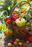 Vegetables in a wicker basket. In the countryside Royalty Free Stock Images