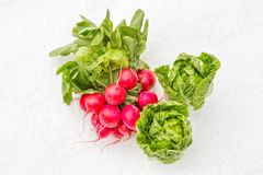 Vegetables in Winter Stock Photography