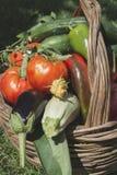 Vegetables in a wooden basket Stock Image