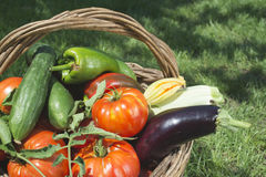 Vegetables in a wooden basket Royalty Free Stock Photos