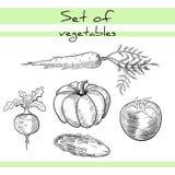 VegetablesSet Fotografia de Stock