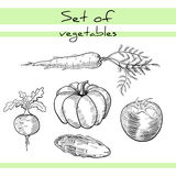 VegetablesSet Stock Photography