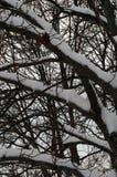 Vegetación, árboles y ramas cubiertos con nieve en el ambiente de congelación del otoño Savonlinna Finlandia fotos de archivo libres de regalías
