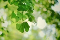 Vegetación Fotos de archivo