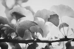 Vegetación Imagen de archivo