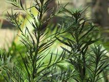 vegetación Foto de archivo