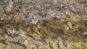 Vegetación acuática con los insectos que mueven encendido el agua almacen de metraje de vídeo