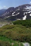 Vegetación alpestre Foto de archivo libre de regalías