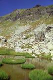 Vegetación alrededor del lago de la montaña Imágenes de archivo libres de regalías