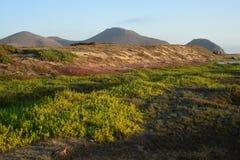 Vegetación cerca de la playa en Cabo San Lucas Foto de archivo libre de regalías
