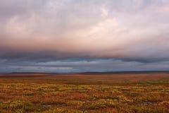 Vegetación colorida de la tundra polar Fotos de archivo libres de regalías