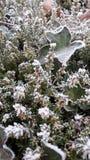 Vegetación congelada Foto de archivo libre de regalías