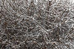 Vegetación cubierta por Snow Fotografía de archivo libre de regalías