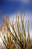 Vegetación de Bush Imagen de archivo libre de regalías