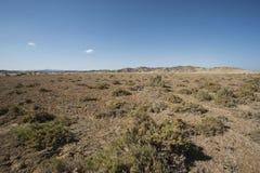 Vegetación de Bush en la duna de arena en desierto Foto de archivo libre de regalías