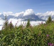 Vegetación de la montaña y dolomías de Sextener, Italia Foto de archivo