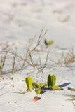 Vegetación de la playa Imágenes de archivo libres de regalías