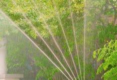 Vegetación de riego automática Fotos de archivo