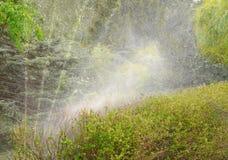 Vegetación de riego automática Imagen de archivo libre de regalías