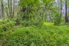 Vegetación de selva densa fotos de archivo